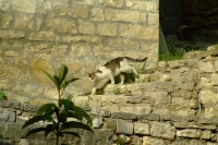 Cat in Berat, Albania