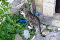 Cat in Berat city