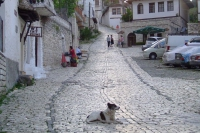 Dog on street of Berat city, Albania
