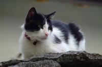 Cat in Gjirokastër