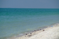 Gulf of Tendra