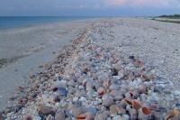 Shells on Tendra Spit